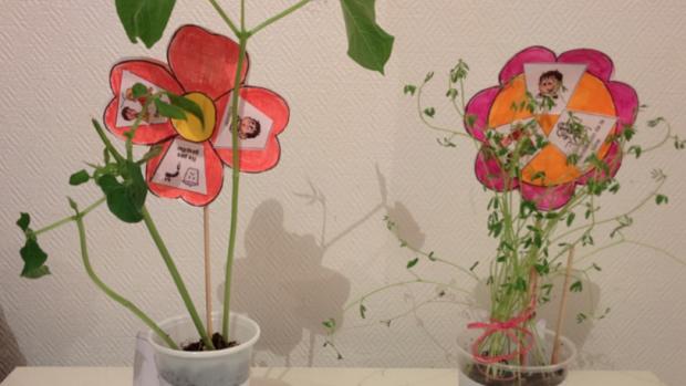 Fleurs Eveil